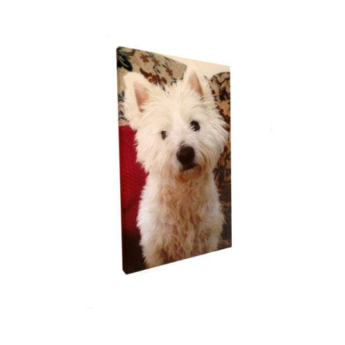 Unique gift idea London Essex personalised canvas print for pets